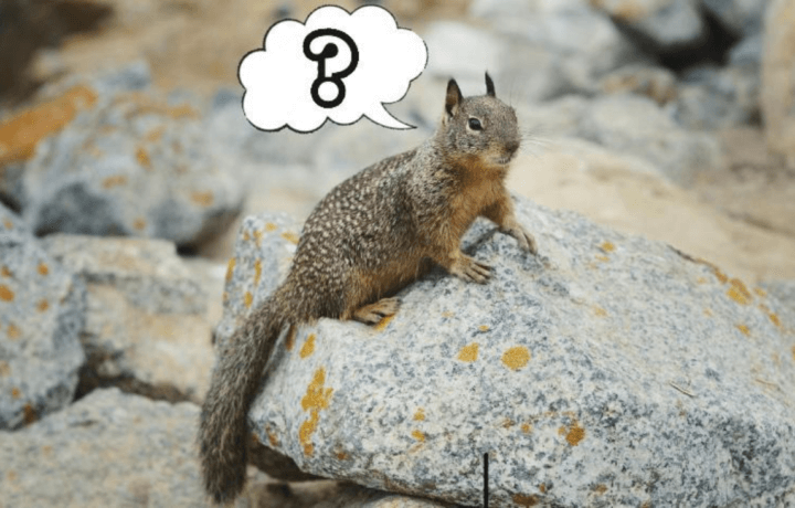 secret squirrel decodes government acronyms